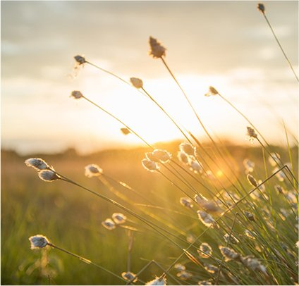 peaceful sunlight